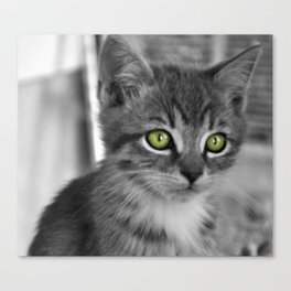 Through the eyes of a kitten Canvas Print