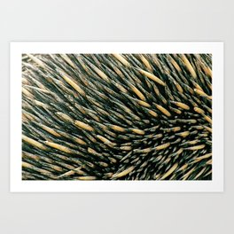 Echidna spines closeup Art Print
