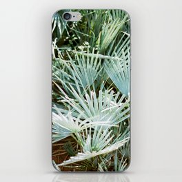 """Travel photography """"Morocco green""""   Botanical design with soft green palm leaves iPhone Skin"""