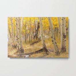 Aspen Forest Metal Print