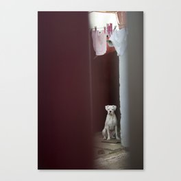 Dirty Laundry Canvas Print