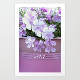 Phlox Love Art Print