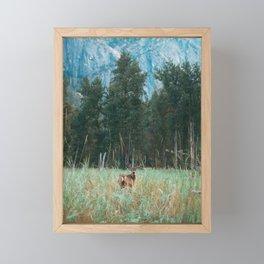 Baby Deer in Yosemite Framed Mini Art Print