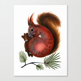TinTin The Red Squirrel Canvas Print