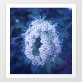 Light Blue Closing Queen Anne's Lace Art Print