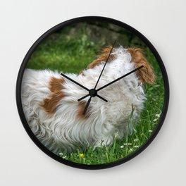 Cavalier King Charles Spaniel Dog Wall Clock