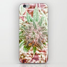 Flower Star Blooming Bud Indoor Hydro Grow Room Top Shelf iPhone Skin