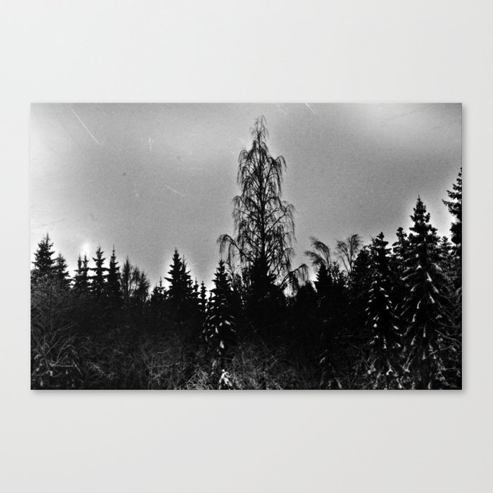 Forest Dark V Canvas Print