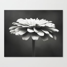 Black and White Flower Photography, Zinnia Floral Photograph, Neutral Nature Photo, Modern Botanical Canvas Print