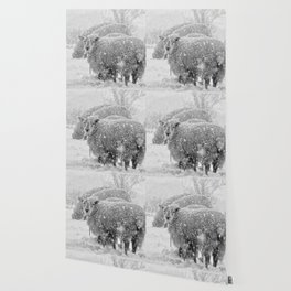 Sheep in the snow Wallpaper