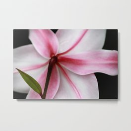 Pink Lily Flower Fine Art Print Metal Print