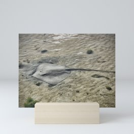 Stingray Mini Art Print