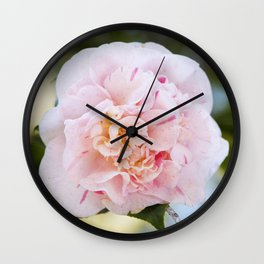 Strawberry Blonde Camellia in Bloom Wall Clock