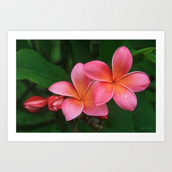He pua laha ole Hau oli Hau oli oli Pua Melia hae Maui Hawaii Tropical Plumeria Art Print