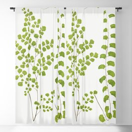 Adiantum Assimile and A Lunulatum from Ferns British and Exotic (1856-1860) by Edward Joseph Lowe Blackout Curtain