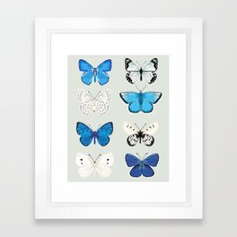 Lepitoptery No. 2 - Blue and White Butterflies and Moths Framed Art Print