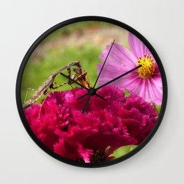 Praying Mantis Dining on a Moth Wall Clock