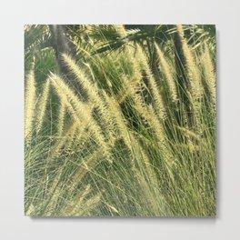 Elegant Field Of Fountain Grass Fine Art Photo Metal Print