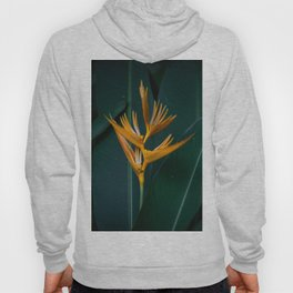 Orchids yellow Hoody