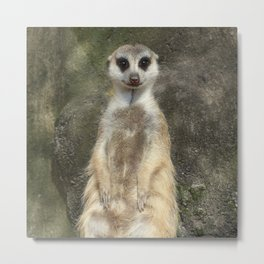 Standing meerkat Metal Print