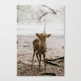 Nara, Japan Deer Fawn Canvas Print