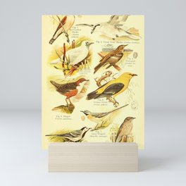 William Playne Pycraft - A Book of Birds (1908) - Plate 25: Shrikes, Wagtails and Flycatchers Mini Art Print