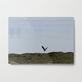 Osprey In Flight on the Ocean Metal Print