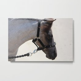 A horse named Roxy Metal Print