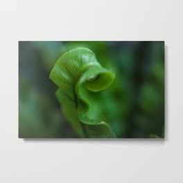 Sleeping Fern Metal Print