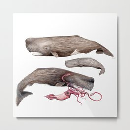 Sperm whale family Metal Print
