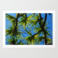 Palm Branches Art Print