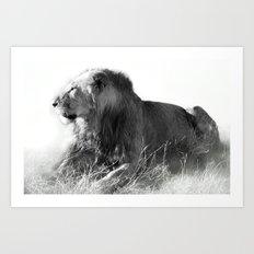 Lion in the Sunshine Art Print