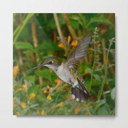 Hovering hummingbird 50 Metal Print