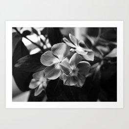 Simple Elegance Art Print