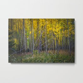 Aspen Grove in Fall Metal Print