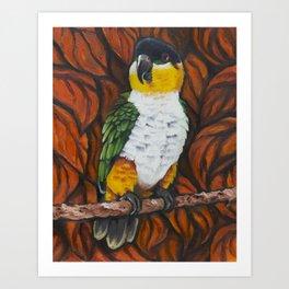 Caique parrot Art Print