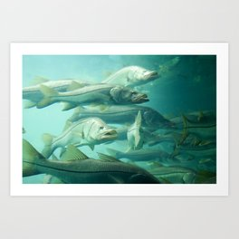 Snook Art Print
