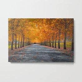 Napa Valley Autumn Lane Metal Print