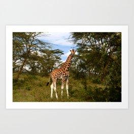 Nakuru Giraffe Art Print