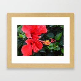 Red Hibiscus Flower Framed Art Print