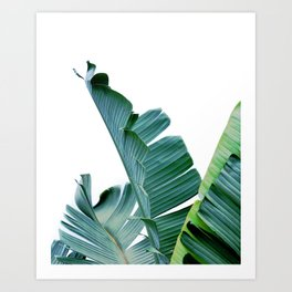 Banana Leaf #society6 #buy #decor Art Print