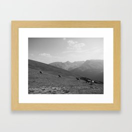 Rams, FILM Framed Art Print