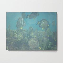 les papillons des poissons Metal Print