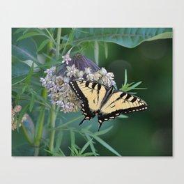 FOY Swallowtail on Milkweed Canvas Print