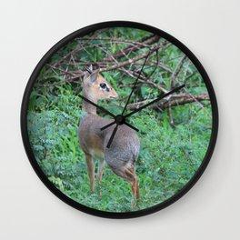 Dik-dik Wall Clock