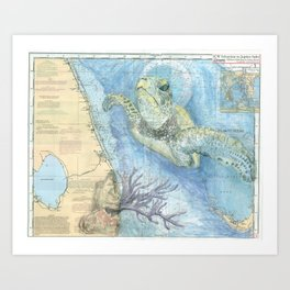West Palm Beach Turtle Art Print