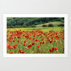 Poppies, Poppies, Poppies Art Print