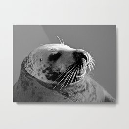 Howth Harbour Seal Metal Print