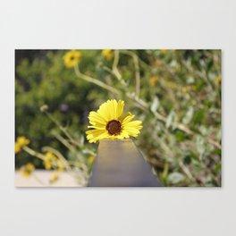 Little Yellow Canvas Print