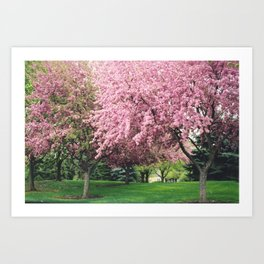 Spring Pink BlossomsTrees Nature Landscape - Pink Nature Wall Art Home Decor Art Print